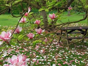 Garden, Magnolia, table, Pink