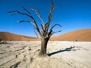 Desert, Africa, trees, Ascension, dry, Areas