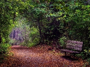 Leaf, Way, viewes, Bench, forest, trees, autumn