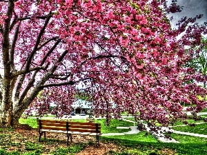 trees, Bench, Park, flourishing, Spring