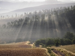 viewes, rays of the Sun, field, trees, Way