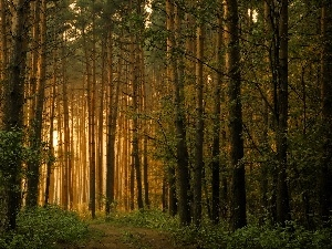 viewes, forest, Way, light breaking through sky, forest, trees