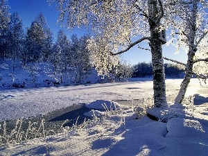 Frozen, frosty, trees, River