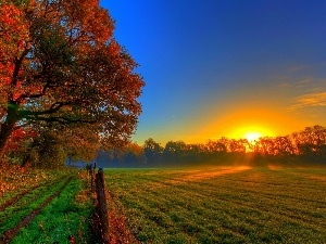 sun, field, viewes, rays, autumn, trees, Leaf