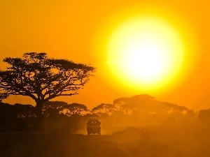 trees, Safari, sun