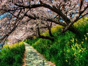 trees, VEGETATION, Path, flourishing, Spring