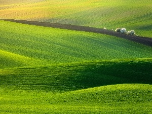 trees, viewes, grass, green, field