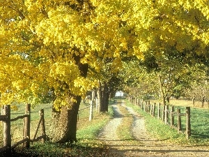 trees, viewes, Path, Yellow, field