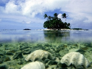 trees, viewes, Aitutaki, water, iceland