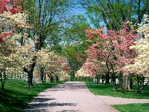 white, Park, trees, viewes, Pink, Spring