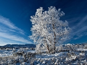 winter, frosty, trees, Sky