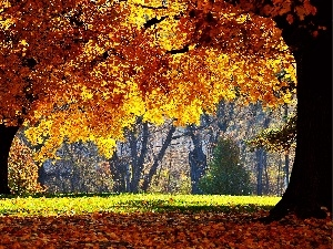 autumn, trees, viewes, color