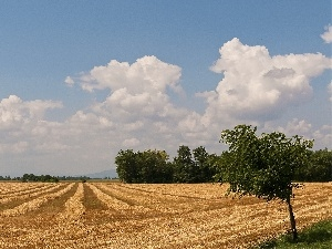 trees, Field, Sky, cereals, Mowed, viewes, clouds