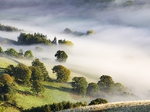 field, trees, viewes, Fog