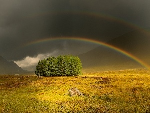 Mountains, trees, viewes, Great Rainbows