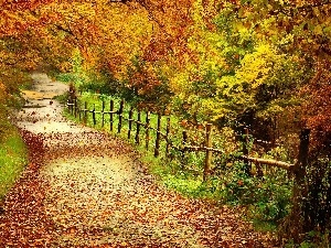 viewes, Leaf, fence, trees, Way