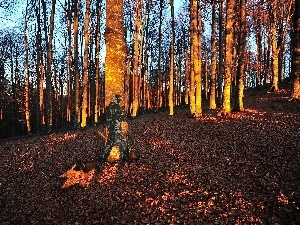 trees, forest, viewes, autumn, flash, luminosity, ligh, sun, Przebijaj?ce