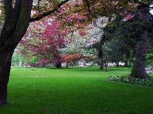 Park, trees, viewes, color