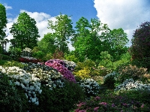 rhododendron, Park, Flowers