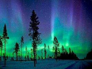 aurora polaris, trees, viewes, winter
