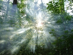 rays, trees, viewes, sun