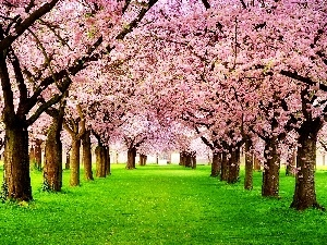 Spring, trees, viewes, flourishing