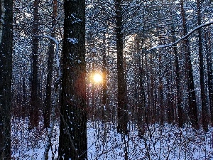 viewes, forest, sun, winter, The clear, trees