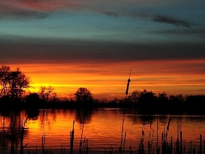 viewes, Great Sunsets, rushes, trees, lake