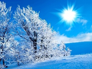 viewes, winter, sun, trees, rays