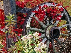 wagon, autumn, circle