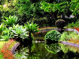 exotic, eye, water, Garden