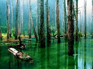 water, awash, forest