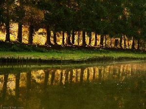 line, reflection, water, trees