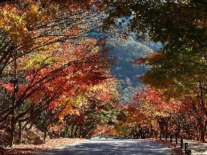 Way, autumn, trees, viewes, color