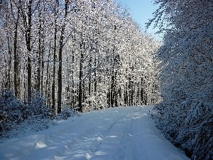 Way, winter, trees, viewes, forest