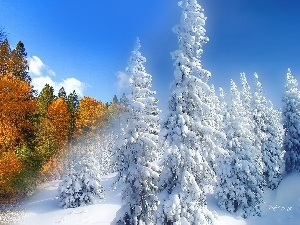 autumn, winter