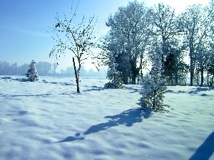 field, viewes, winter, trees