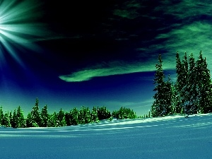 winter, aurora polaris, rays, snow, forest