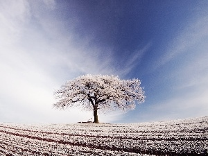 trees, field, winter, Sky