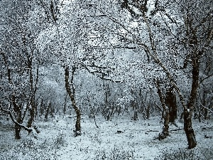 trees, forest, winter, viewes