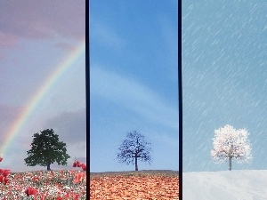 year, four, Seasons