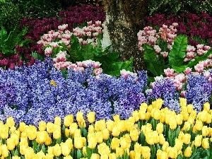 Yellow, Tulips, different, Flowers, Garden