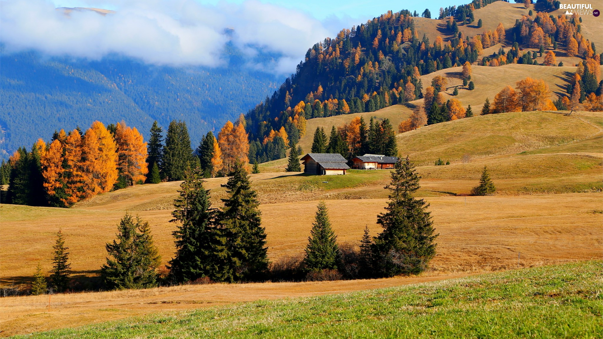The Hills, Seiser Alm Meadow, field, trees, Trentino-Alto Adige, Italy, Houses, autumn, viewes