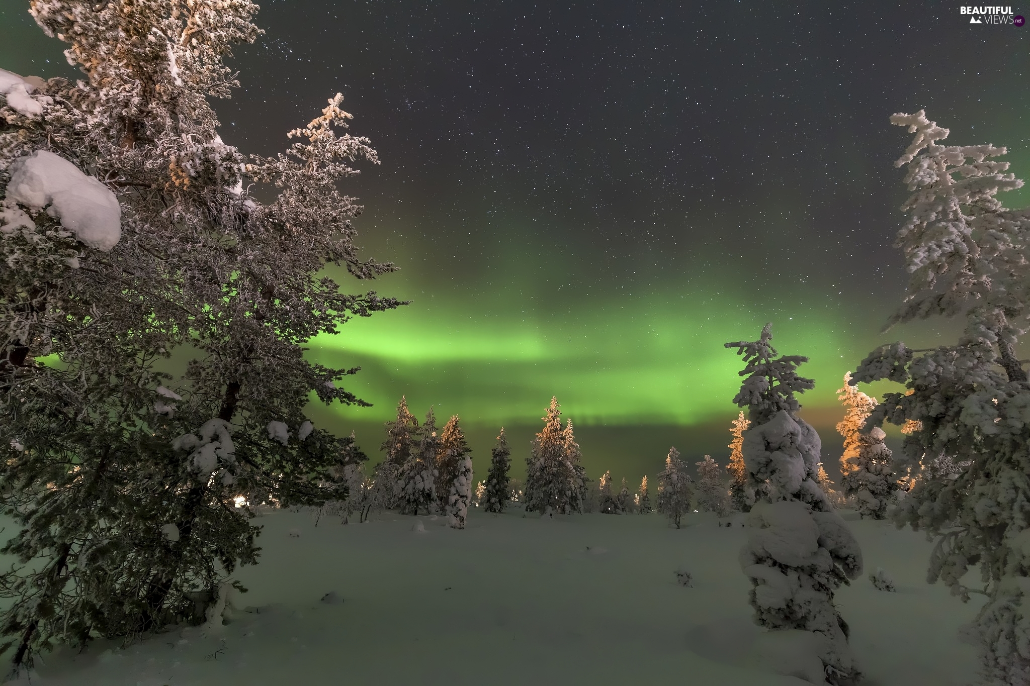 viewes, winter, Spruces, aurora polaris, Snowy, trees