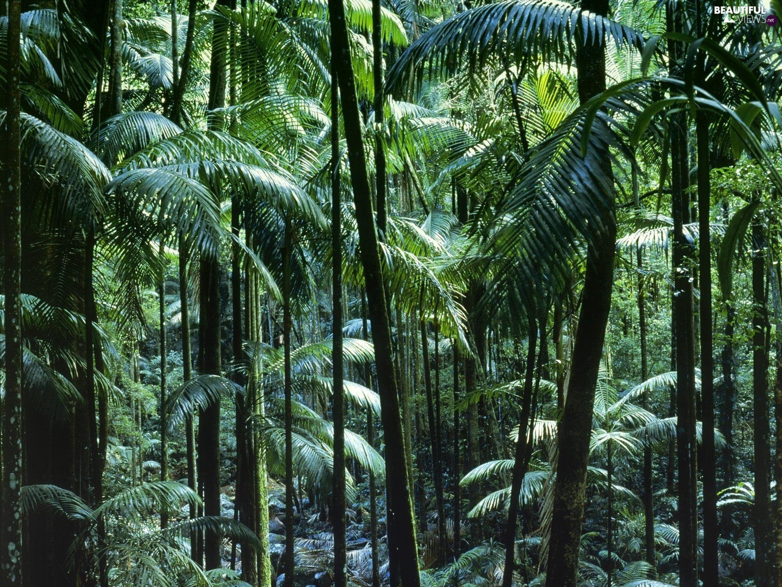 Australia, forest, tropical