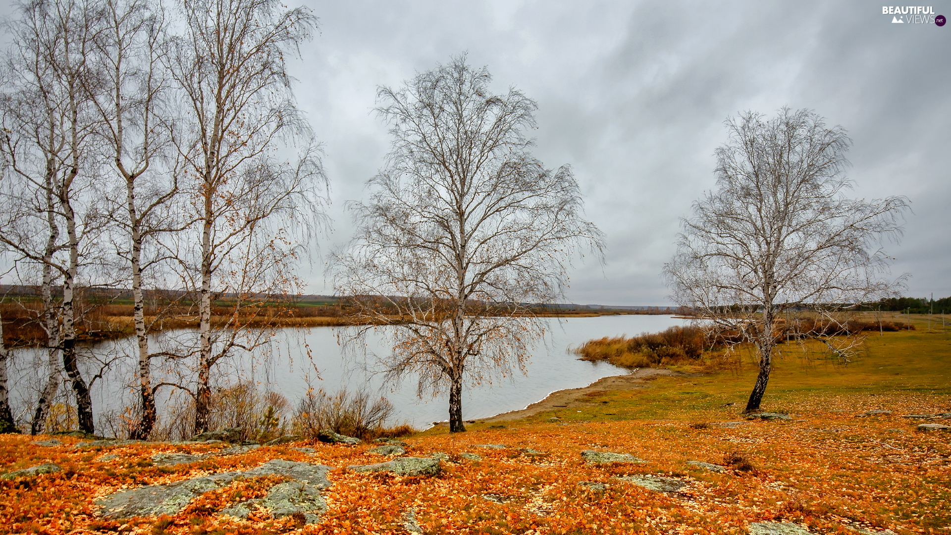 viewes, autumn, birch, trees, lake