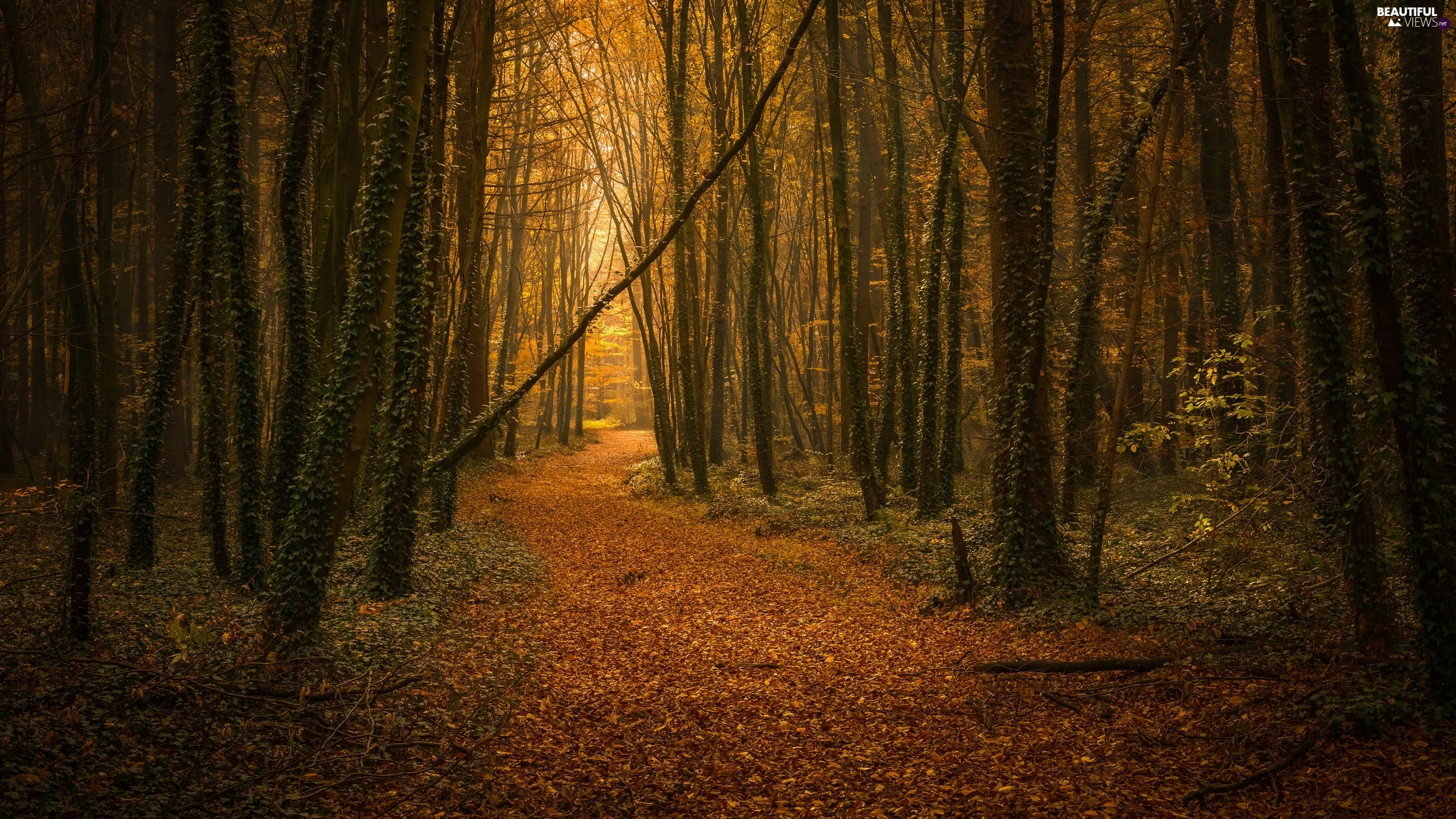 forest, Path, Leaf, autumn