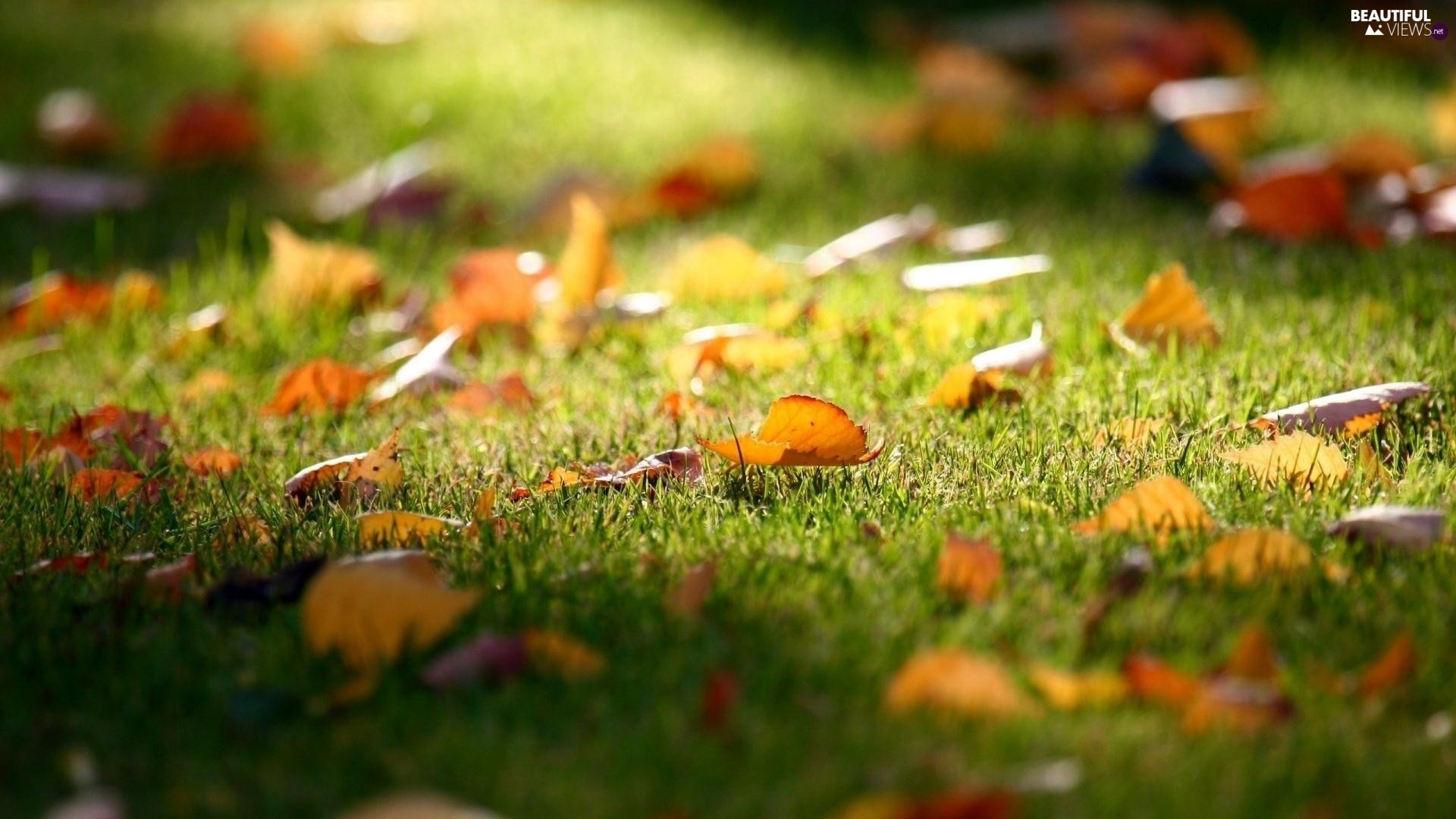 autumn, Leaf, grass