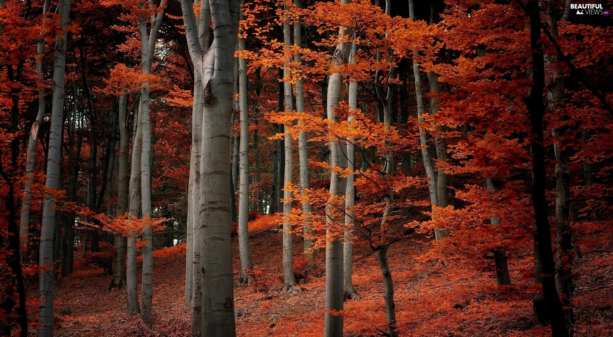 autumn, forest, Leaf