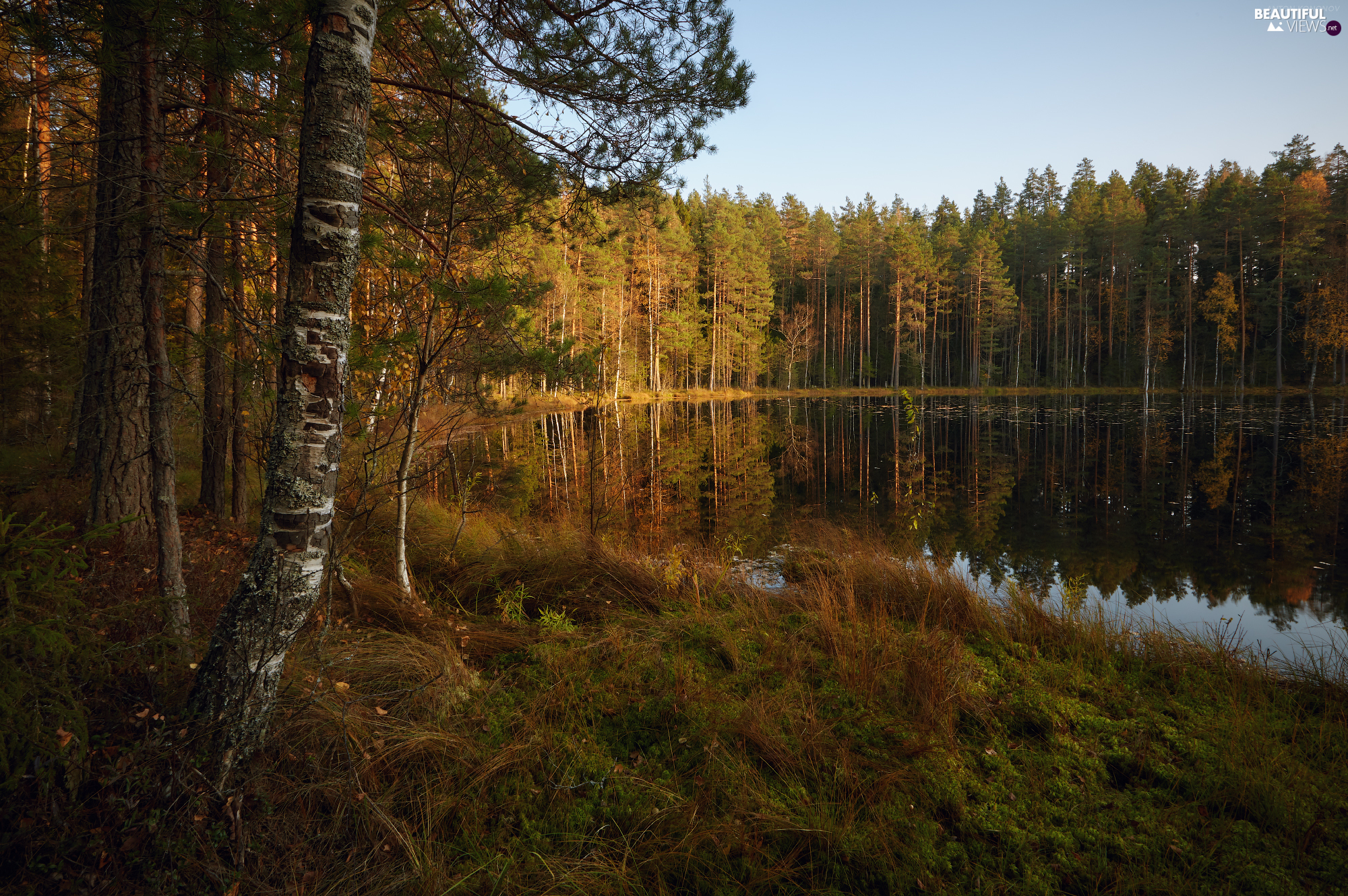 forest, autumn, trees, viewes, lake